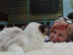 międzynarodowa wystawa kotów