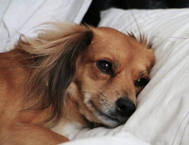 Spanie w jednym łóżku z psem
