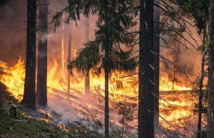 Pożar w Szwecji